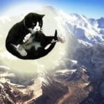 famous hymalayian levitating cat