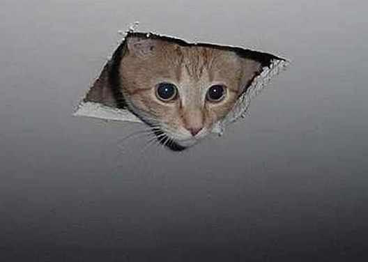 ask ambrose ceiling cat