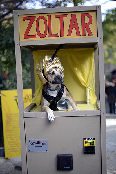 A dog dressed as a Zoltar fortune telling machine at the 23rd Annual Tompki