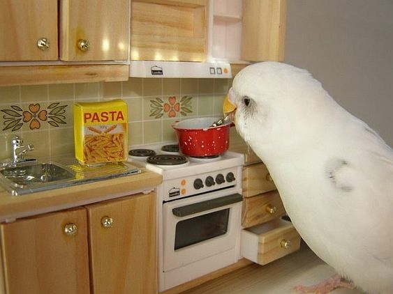 giant budgie kitchen pasta
