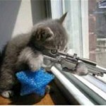 kitten with gun