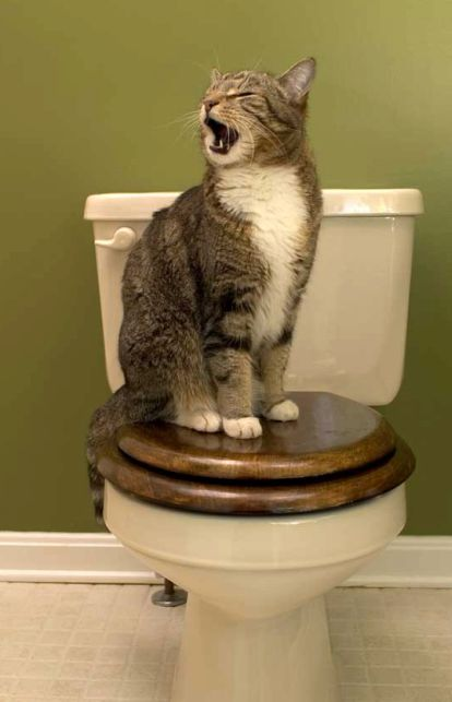toilet cat singing at 3am
