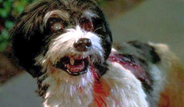 zombie dog makeup