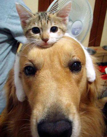 dear ambrose dog has weird tumor