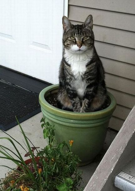 flower-pot-cat-looks-kind-of-evil
